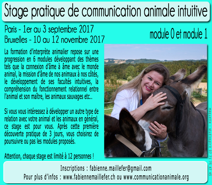 Stage pratique de communication animale intuitive - Nouvelles dates
